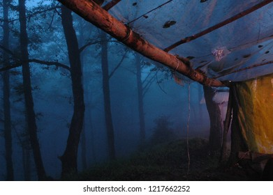 Nature of Fog and Forest in Night, Abbas Abad Forest, Mazandaran, North of Iran