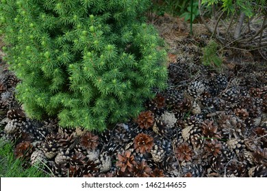 Forest Mulch Images Stock Photos Vectors Shutterstock