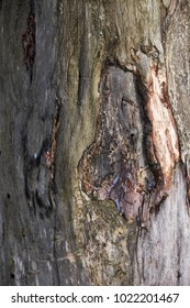 nature forest background wood texture