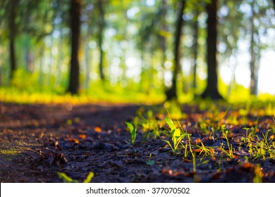 Nature forest landscape. Close up forest nature ground in the park during spring. Nature road blurred background.