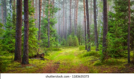 Nature forest landscape. Green summer forest.