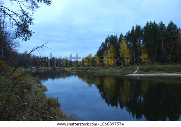 Nature Forest Water River