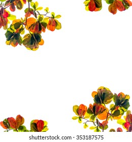 nature frame from colorful leaves on white background. isolated