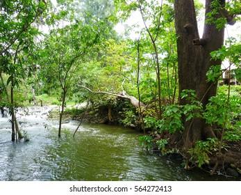 nature in a garden of Thailand