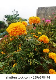 Nature Gardren Striking Growth Bright Orangy Flowers