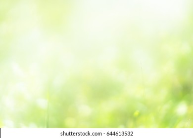nature glitter, green color nature bokeh, focus soft blur, green color filter abstract for background