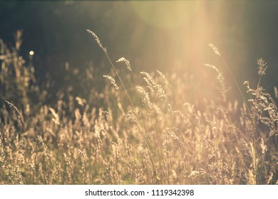 nature grass flower field in soft focus and Vintage soft light tone