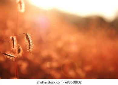 The nature grass flower in sunset before night and blur vintage background.