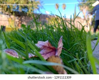 Nature grass portrait background green