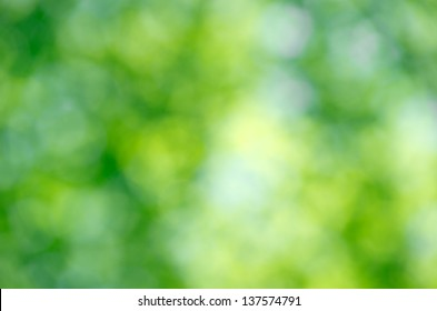 Nature green abstract bokeh background