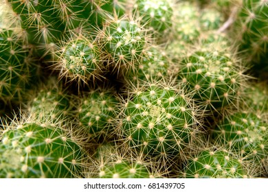 Nature, green background, cactus tree
