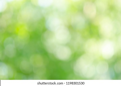 nature green bokeh sun light flare and blur leaf abstract texture background