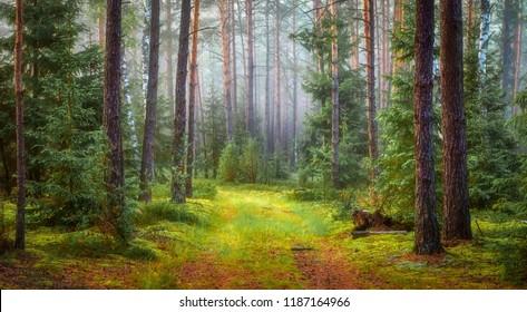 Nature green forest landscape.