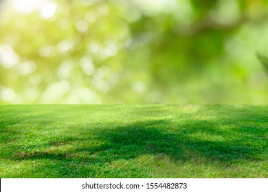 Nature green grass with bokeh background.  - Shutterstock ID 1554482873
