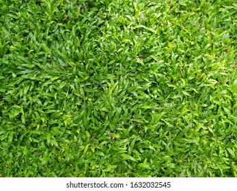 Nature green grass texture background