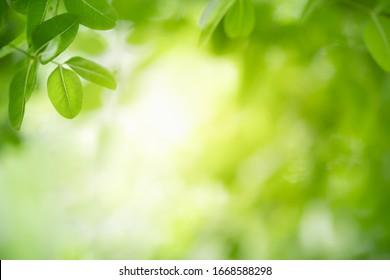 Schöne Natursicht auf grünes Blatt auf unscharfem grünem Hintergrund im Garten mit Kopienraum für Text als Sommerhintergrund Naturgrüne Pflanzen Landschaft, Ökologie, frisches Tapete Konzept.