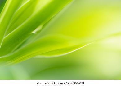 Art des Grünblattes im Garten unter Verwendung als Hintergrund, Naturhintergrund
