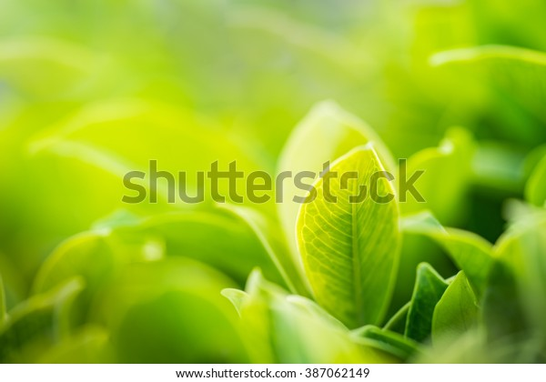 Nature of green leaf in garden at summer under sunlight. Natural green leaves plants using as spring background environment ecology or greenery wallpaper