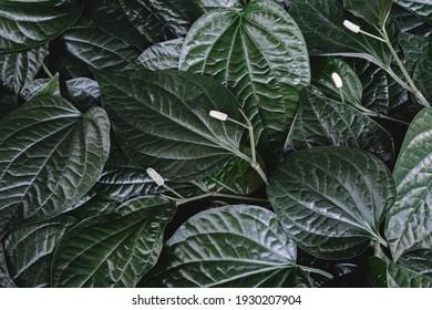 Nature green leaf pattern background, backdrop