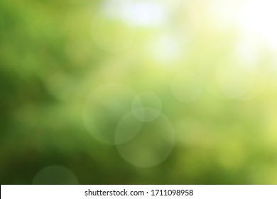 Nature Green leafy abstract bokeh light blur