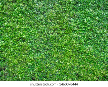 nature green leaves wall texture