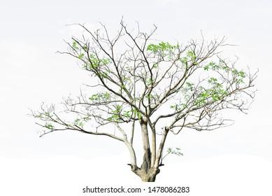 nature green tree white sky