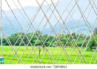 nature green view bamboo mountain landscape outdoor rice