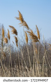 Nature images, reeds next to the forest.