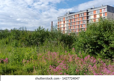 nature in industrial wasteland of Paris suburb