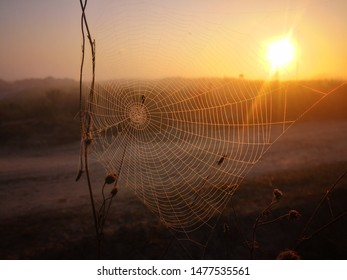 Nature insect, spider web on a sunset sunrise background, rural field