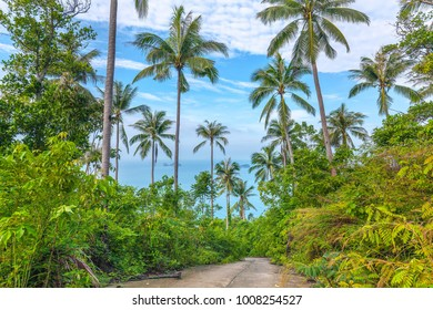 The nature of Koh Samui in Thailand.