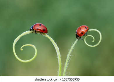 from nature ladybird