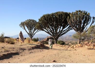 Nature of Lalibela Ethiopia