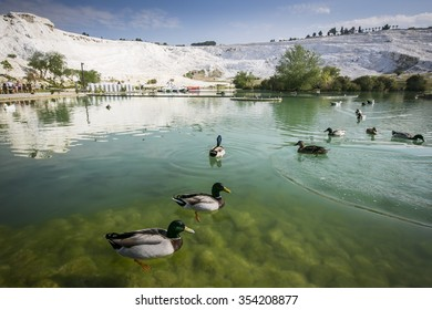 Nature landmarks in Turkey - landscape with travertines and turquoise water. Thermal springs and terrace in spa resort Pamukkale - natural reserve in Turkey.