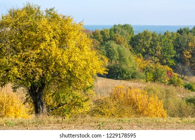 Nature landscape with autumn trees