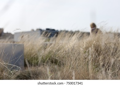Nature landscape field