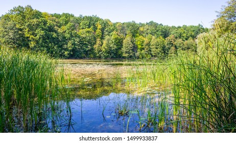 Nature landscape with forest lake