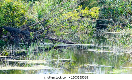 Nature landscape with forest river