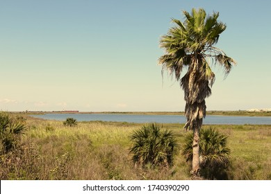 Nature landscape on Galveston Island, Texas, USA. A palm tree, the blue water of the lagoon and container ships in the far distance.