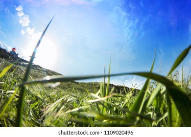 Nature landscape photo with closeup grass and blue skies with sun shining.