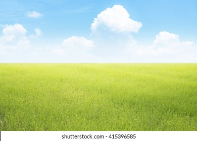 Nature landscape with rice field and cloudy sky background