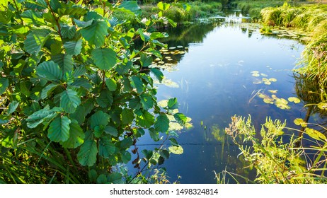 Nature landscape with small lake and plants
