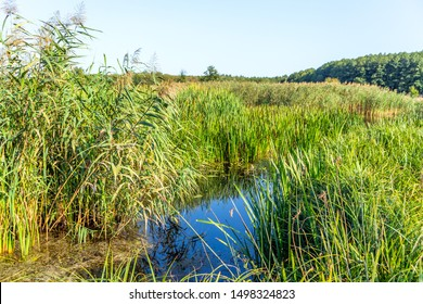 Nature landscape with small pond and grass