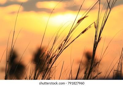nature landscape summer