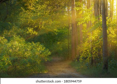 Nature landscape of sunshine in summer wood.
