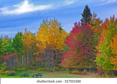 Nature landscape, Trees changing colors during autumn in a forest park with benches, rural Pennsylvania Poconos Mountains