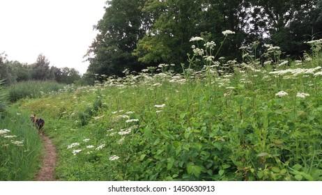 Nature landscape with various types of flowering wild plants on the Zegersloot golf course at Alphen aan den Rijn in the Netherlands