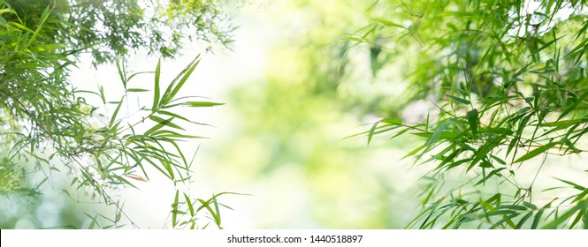Nature landscape view of bamboos branch with natural light in blur style. Beautiful green leaves and tree with bokeh in tropical forest. Growing bamboo border design over blurred sunny background