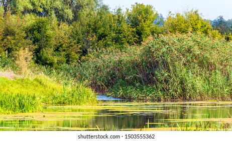 Nature landscape with the water and plants