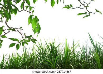 Nature leaves with green grass